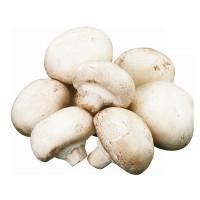 Venta de Compost Pasteurizado para Champiñones