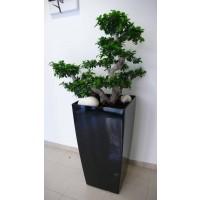 Decoración de Interiores con Planta Natural