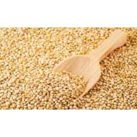 Quinoa Convencional Organica