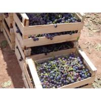 Excelente Viñedo de 120 Hectáreas en Argentina - Provincia de Catamarca