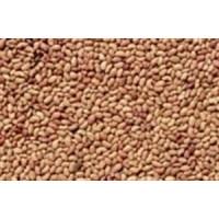 Semilla de Alfalfa Eco. P.5Kg