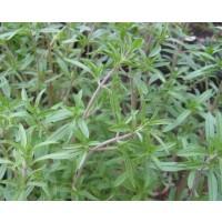 Ajedrea  - Satureja Hortensis. 100 Gr / 100.0