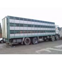 Camion para Tranporte de Ganado