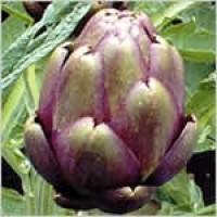Alcachofa Morada-Violeta de Provenza. 50 GR.