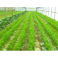Explotación de Horticultura Ecológica