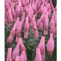 Malla para Flores (Crisantemos, Girasoles, Rosas...)