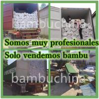Tutores de Bambú de 180 Cm 14/16 Mm 150Pcs