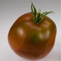 Tomate Negro de Siberia ECO. 10 Semillas Ecológicas