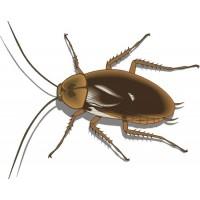 Control de Plagas Domesticas