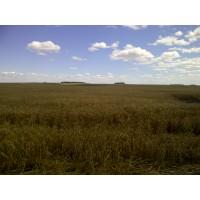 Finca Agricola en Uruguay - No es una Moda, es un Buen Negocio-