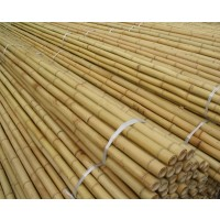 Tutor Bambú 12/14 Mm 120 Cm  250Pcs