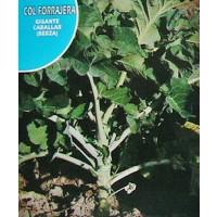 Col Forrajera Caballar. Gigante Berza. Envase Hermético de 8 Gr / 1600 Semillas