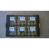 Higos Chumbos,tunos, Prickly Pears. Certificados Ecologicos