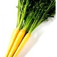 Zanahoria Amarilla Jaune Du Doubs. 6400 Semillas.