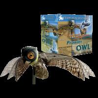 Búho Espantapájaros - Prowler Owl