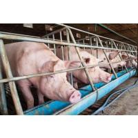 Venta de Granja de Cerdos Nueva a Estrenar en el Bayo (Ejea)