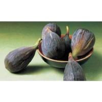 Frutal Higuera Negra. Higos Negros. 20-30 Cm.