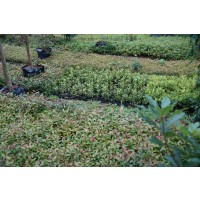 Bioverde Arboles Plantas & Jardines