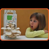 Kit Infantil de Cultivo de Setas