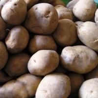 Patatas de Siembra Jaerla 10kg