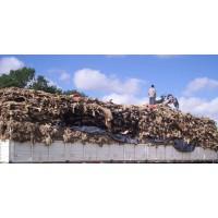 Cueros de Cordero 10.000 Unidades Disponibles