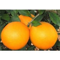 Naranja Navel-Lane Mesa 15 Kg