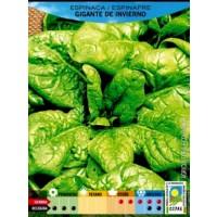 Espinaca Gigante de Invierno Ecologico. 2 Gr.