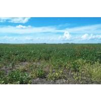 Finca Agricola y Ganadera Muy Barata en Argentina - 500 Hectáreas 575.000 Euros