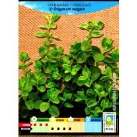 Oregano Origanum Vulgare Ecologico. 0,1 Gr. 7