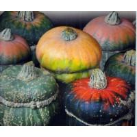 Semillas Calabaza Decorativa Hongo. 2 Gr. de