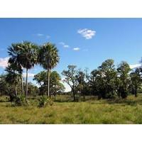 Vendo 1.100 Hectareas Estancia Ganadera - Paraguay