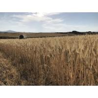 Cebada y Avena Ecológicas