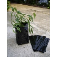 Plantar Olivos y Frutales en Bolsas, Plantones. Bolsa de 24X40 Negra. 200 Unidades
