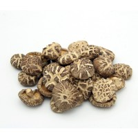 Micelio en Grano de Setas Lentinula Edodes (Shiitake). 1 Kilo. Semillas