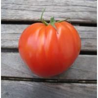 Tomate Corazón de Buey. 1 Gr.