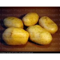 Vendo Patatas Ecologicas Recien Cogidas