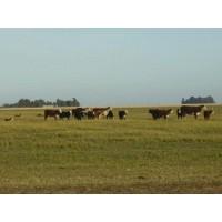 Argentina, Finca Agricola y Ganadera- los Precios Subirán a Fín de Año