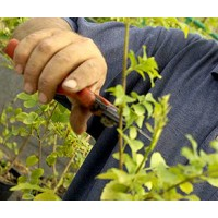 Poda y Mantenimiento de Jardín