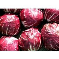 Semillas de Achicoria Palla Rossa. 50 Gramos