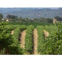Venta de 42 Ha. de Viñedo en la Rioja
