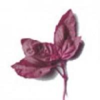 Albahaca Purpura.ocimum Basilicum. 2 GR.