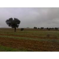 Plantaciones de Árboles con Plantadora Gps