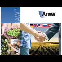 Araw, Fungicida Preventivo-Curativo para Control de Botritis en Viña de Sipcam
