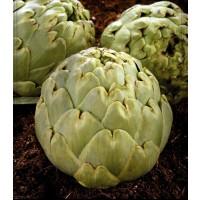 Alcachofa Green Globe. Envase de 2 Gr.