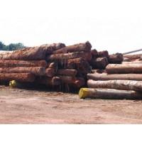 Inversión en Madera Tropical (Recurso Natural Sostenible y Renovable).