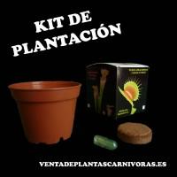 plantas carnivoras semillas