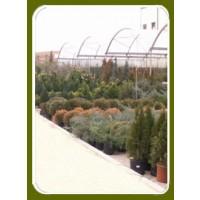 Viveros la mezquita informaci n y productos para venta on for Arbustos de hoja caduca