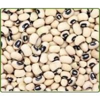 Frijol Castilla (Black Eye Beans)