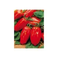 Tomate San Marzano Ecológico 2g