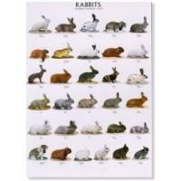 Poster de Conejos I
